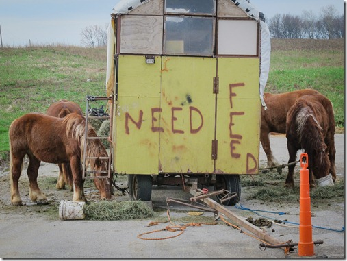 20130414_Horse Caravan